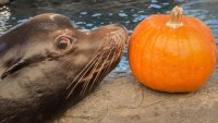 Critters, Costumes, and Crafts Fill Scarium of the Pacific