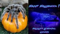 Find 'Creeptacular' Critter Fun at the Wildlife Learning Center