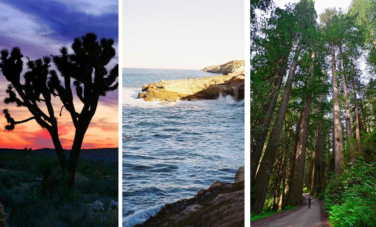 California has a lot to offer when it comes to its parks and historic sites.