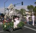 pdgolf64-Ziggy-Zebra_2
