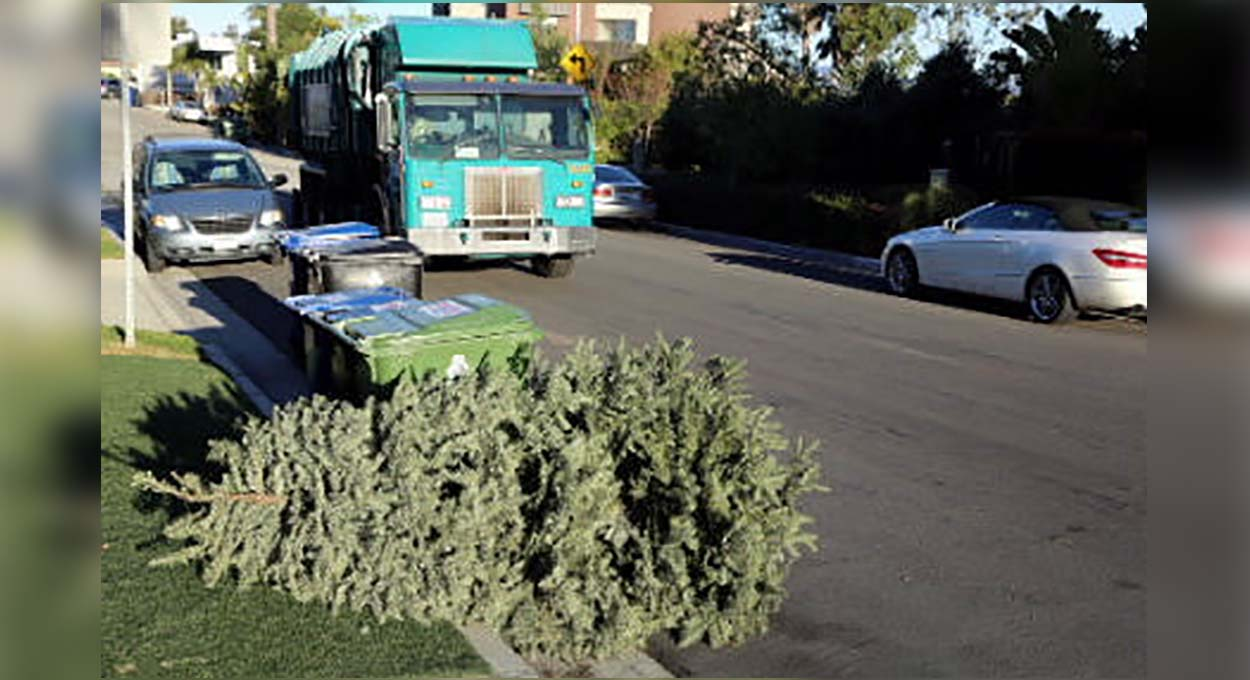 A Christmas tree left for curbside pick-up in Los Angeles.