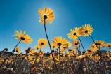 dvflowers_6