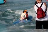 surfdog1222