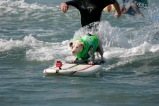 surfdog3492