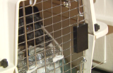 SPCA Flies Chihuahuas Out of LAX