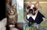Two Internet Animal Stars, One Heartwarming Weekend