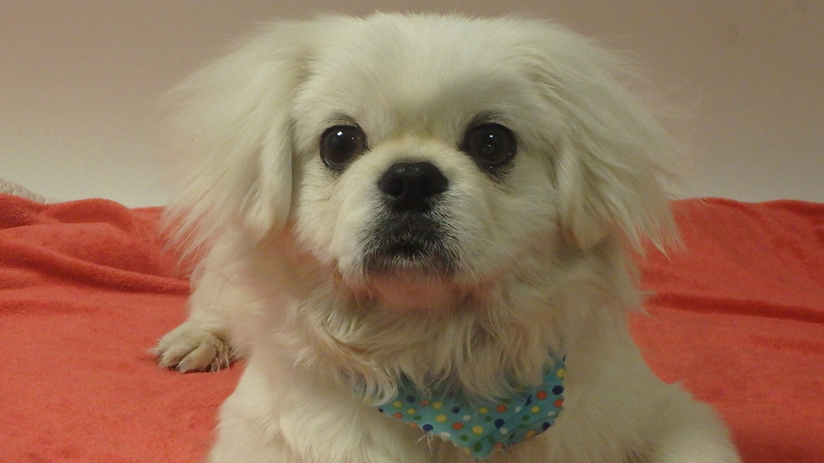 Butter is the pet of the week for Thursday, Dec. 20, 2018.