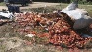 Arkansas Spaghetti Sauce Spill