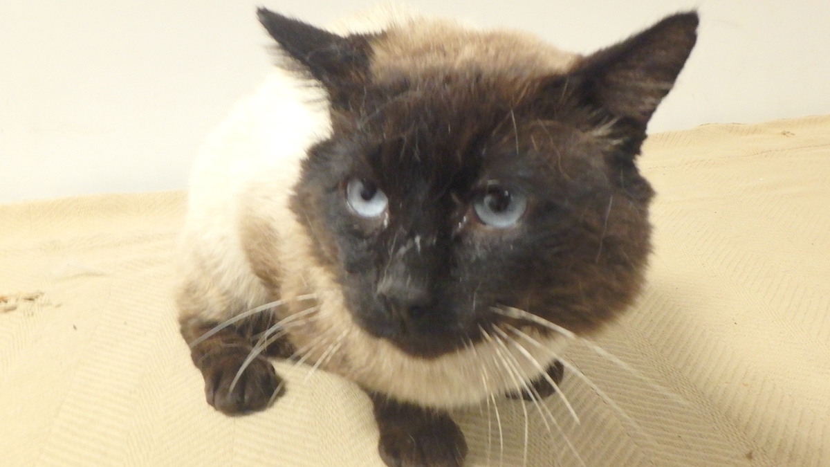 Pet of the Week: Tommy