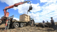 Malawi  Elephant Delivery