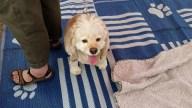 Doggie-Fest-0827-3
