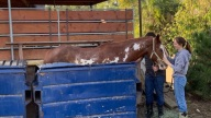 Odd Rescue: Horse Trapped in Orange County Dumpster Hoisted to Safety