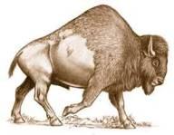 knbc-ancient-bison-bone-discovered-4