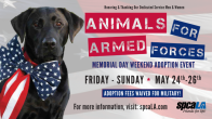 Free Pet Adoptions for Members of the Military