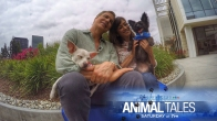 Tune in for NBC4's Life Connected: Animal Tales on August 8