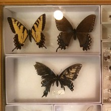 Accused LAX Butterfly Smuggler Sentenced