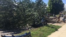 Strong Winds Down Trees, Power Lines in SoCal