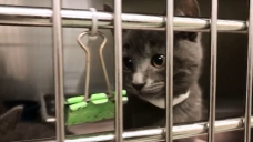Help Clear the Shelters With NBCLA and Telemundo 52