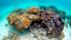 Gardena Man Convicted for Trying to Smuggle Coral to Mexico