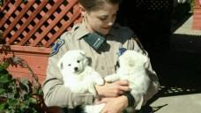 Sheriff's Deputies Apprehend Adorable Perpetrators: Puppies