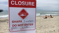 Shark Sighting Closes Beaches in San Clemente