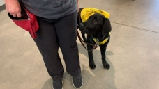 Guide Dogs of America Takes Puppies on Mock Airport Training