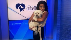 Pet of the Week: Dylan