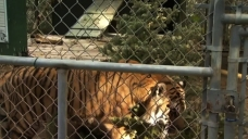 Community Bands Together to Rescue Exotic Animals Amid Fire
