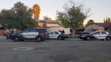 Pit Bull Gets Loose, Attacks 2 People Including 14-Year-Old Boy in Hemet