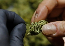 Marijuana Dispensaries Pull Products After Investigation