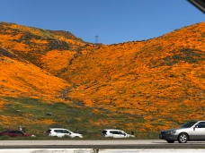 Lake Elsinore to Shut Car Access to 'Super Bloom' Area
