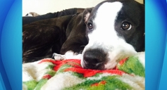 3 Years Probation for Man Who Fatally Slashed Pit Bull