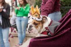 Addie the Bulldog Crowned University of Redlands Mascot