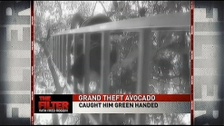 Grand Theft Avocado