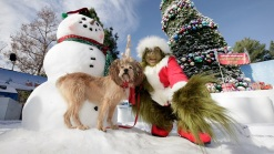 Universal's Grinchmas Welcomes Celeb Readers