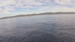 RAW VIDEO: Killer Whales Dive Under Stand-Up Paddleboarder