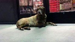 Lost Dog Seeks Shelter at Pet Store