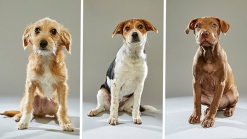 Get Ready For Cuteness: Puppy Bowl Line Up