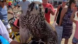 Falcons Winning Battle of the Birds on Jersey Shore