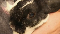 'We're More Bunny People': Families Adopt More than Cats and Dogs From Shelters
