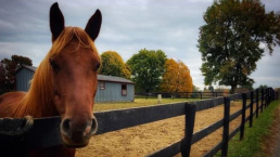 Va. Rescue Group Helps Neglected Horses Find Forever Homes