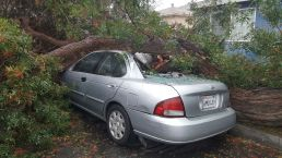 Your February Storm Damage Photos