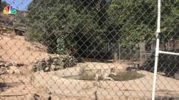 Wolves Rescued from Fur Farm Find Refuge in SoCal