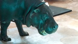 A 'Hippopotamus For Christmas' Wish Comes True
