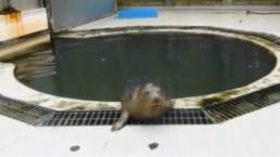 UK Seals Sing in Human Voice