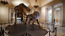 Are the 'Dueling Dinos' Real at the Natural History Museum of Los Angeles County?