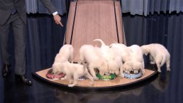 Tonight': Puppies Predict the 2017 Final Four Championship