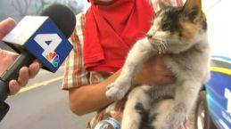 'I Found a Little Kitty': Cat Rescued During Thomas Fire in Ventura