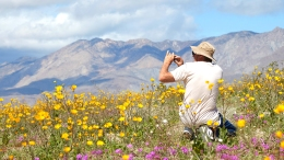 Where to Find Wildflowers: 11 Places That Are Not Lake Elsinore