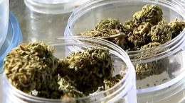 LA Voters Face 3 Medical Marijuana Measures